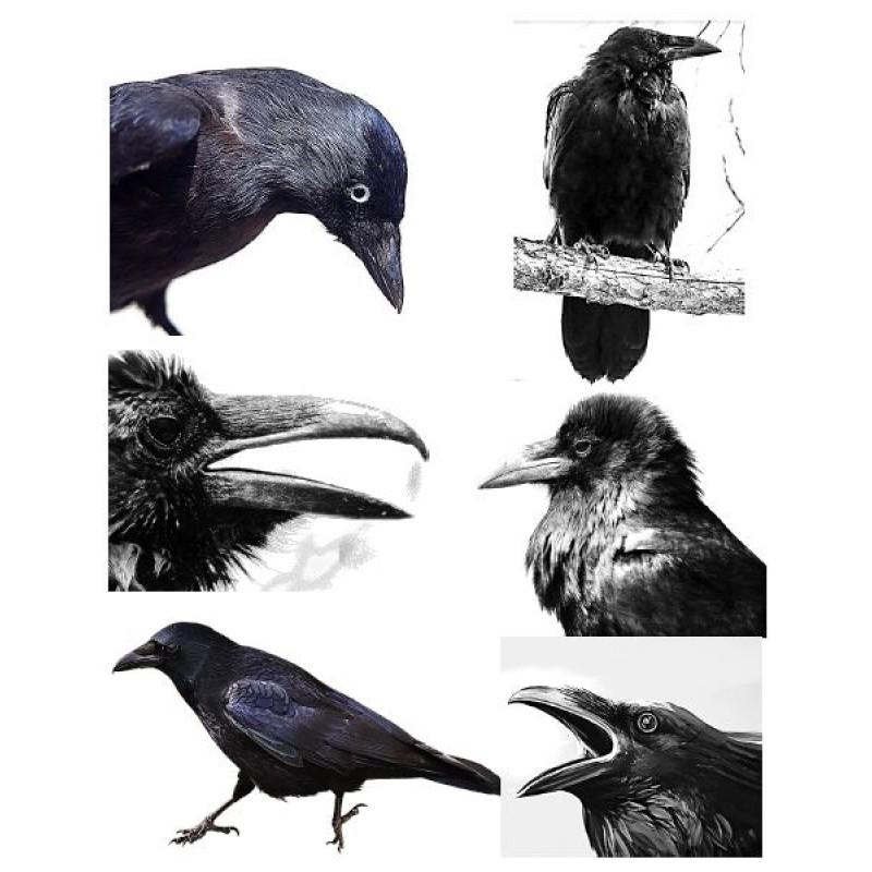 ma tre corbeau projet d 39 arts plastiques. Black Bedroom Furniture Sets. Home Design Ideas